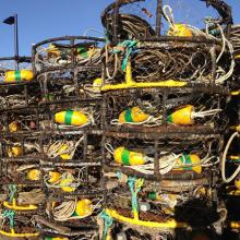 Crab pots waiting for the season, Humboldt Bay, Eureka