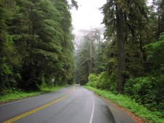 Another beautiful Humboldt County highway